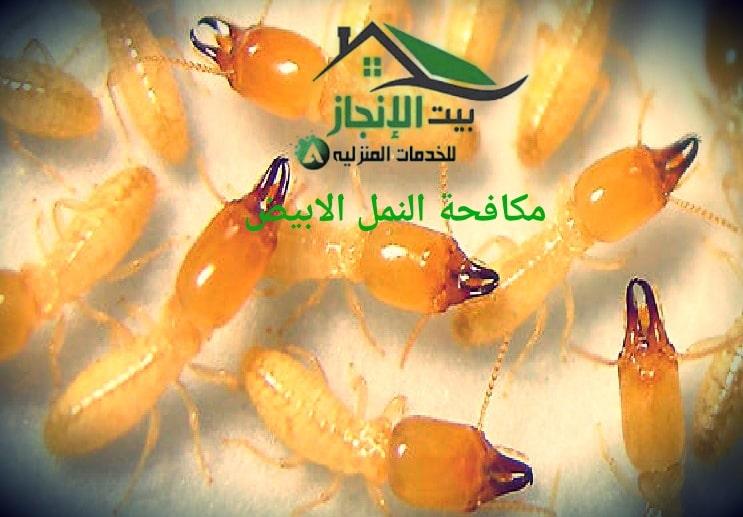 شركة مكافحة النمل الأبيض بالرياض 0533642545 خصم15%
